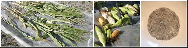Von der Maispflanze zum Messpräparat für die Gammaspektroskopie