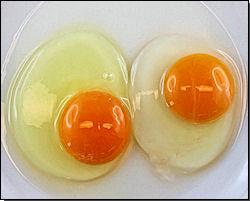 Eier, aufgeschlagen