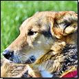 Hund (Foto: Pixabay)