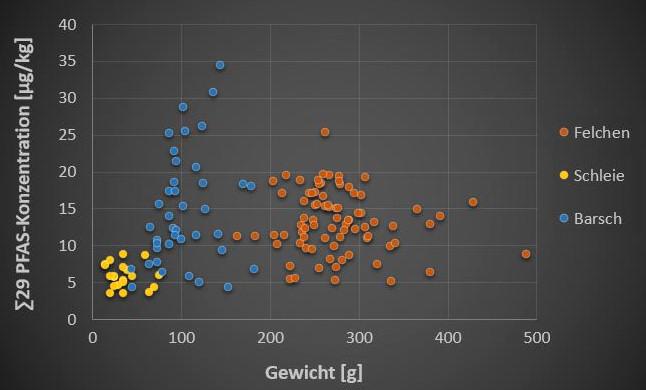 Abbildung 5: ∑29 PFAS-Konzentration im Fischfilet von 20 Schleien (gelb), 40 Barschen (blau) und 80 Felchen (orange) aus dem Ober- und Untersee des Bodensees in Abhängigkeit vom Gesamtgewicht des jeweiligen Fisches (Untersuchungsprogramm 2020).